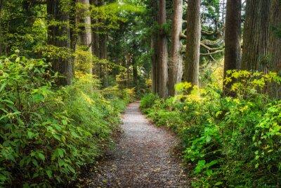 Naklejka Forest path in the wilderness