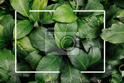 Naklejka Frame tropical leaf texture green leaves Background, foliage nature