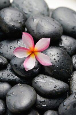 Naklejka frangipani and wet black pebbles