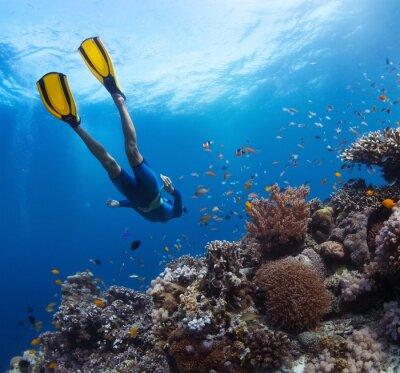 Naklejka Freediver