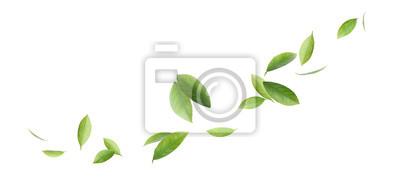 Naklejka Fresh green citrus leaves on white background