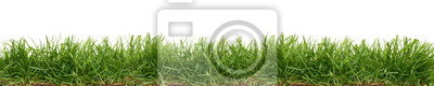 Naklejka Fresh green grass isolated against a white background
