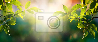 Naklejka fresh green leaves in spring and bokeh background
