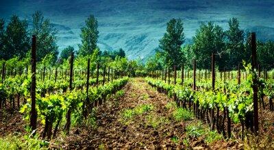 Naklejka Fresh green winnicy