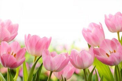 Naklejka Fresh tulip flowers