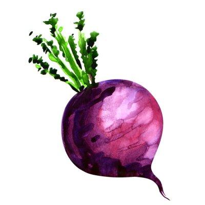Naklejka Fresh turnip isolated on white background