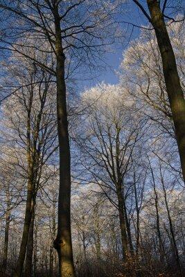 Frost und Reif Bäumen
