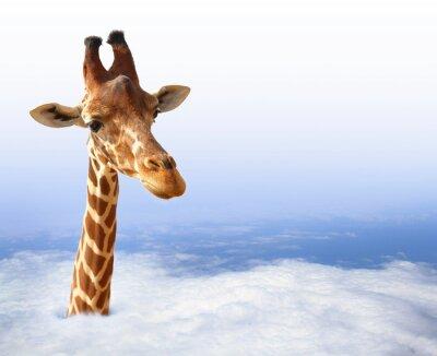 Naklejka Funny żyrafa z wychodzi z chmury