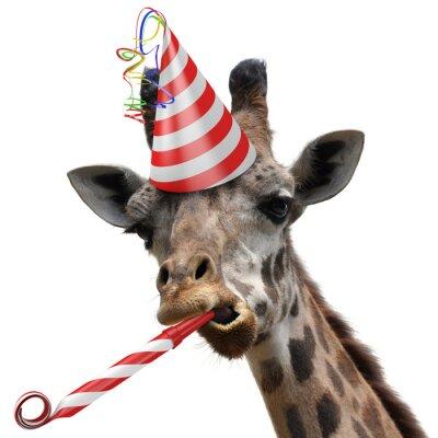 Naklejka Funny żyrafa zwierzę strona podejmowania głupią minę
