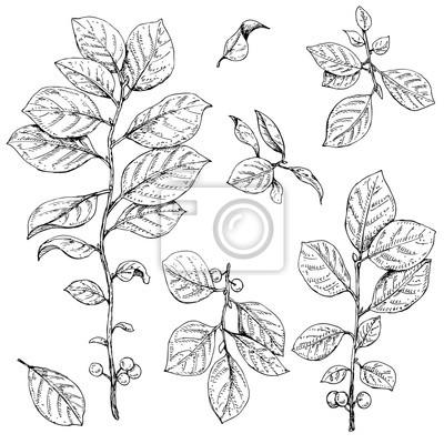Gałęzie z liśćmi i jagody zestaw