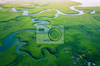 Naklejka Gambia Mangroves. Aerial view of mangrove forest in Gambia. Photo made by drone from above. Africa Natural Landscape.