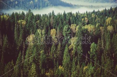 Naklejka gęsta mgła pokryta gęstym lasem iglastym.