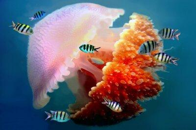Naklejka gigant pływania meduzy z mackami po podwodny