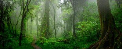 Naklejka Głębokie tropikalne dżungle Azji Południowo-Wschodniej w sierpniu