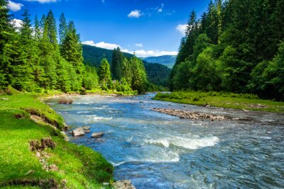 Naklejka Górskie rzeki w lesie świerkowym