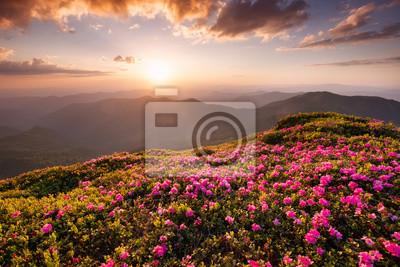 Góry podczas kwiatów kwitną i wschód słońca. Piękny naturalny krajobraz w okresie letnim