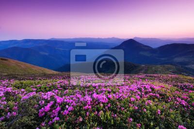 Naklejka Góry podczas kwiatów kwitną i wschód słońca. Piękny naturalny krajobraz w okresie letnim