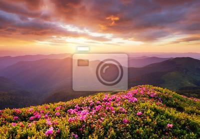 Naklejka Góry podczas kwitnienia kwiatów i wschodu słońca. Kwiaty na górskich wzgórzach. Piękny naturalny krajobraz w okresie letnim. Naturalne tło