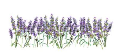 Naklejka Granica lawendy. Akwarela fioletowe kwiaty