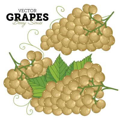 Naklejka Grape Set, Wektor.