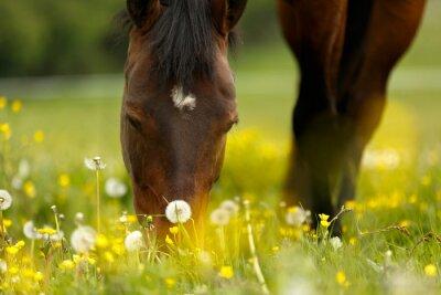 Naklejka Grasendes Pferd