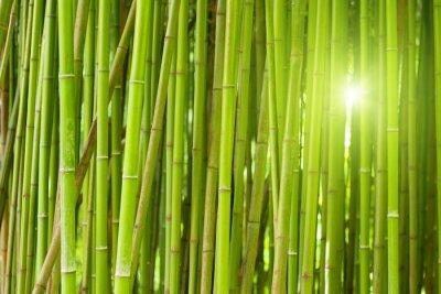 Naklejka Green Bamboo Forest