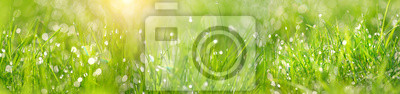 Naklejka Green grass abstract blurred background. beautiful juicy young grass  in sunlight rays. green leaf macro. Bright fresh Summer or spring nature background. Panoramic banner. copy space