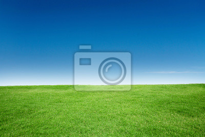 Naklejka Green Grass Texture with Blang Copyspace Against Blue Sky