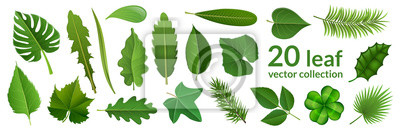 Naklejka Green leaf collection including 20 type of different leaf design, tropical, flower and fruit leaves. Vector illustration, isolated on white, for nature, eco and summer design