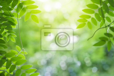Naklejka Green leaf for nature on blurred background with beautiful bokeh and copy space for text.
