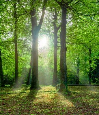 Naklejka Grüner Wald im Sommer mit Gegenlicht