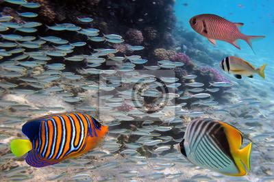 Naklejka Grupa koralowców ryb w wodzie niebieski