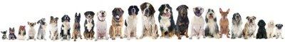 Naklejka grupa psów