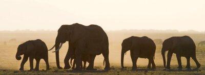 Naklejka Grupa słonie chodzenia na sawannie. Afryka. Kenia. Tanzania. Serengeti. Masajowie Mara. Doskonałą ilustracją.