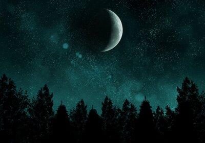 Naklejka Gwiaździsta noc z lasu i Księżyca