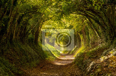 Naklejka Halnaker tree tunnel in West Sussex UK with sunlight shining in. This is an ancient road which follows the route of Stane Street, the old London to Chichester road.