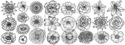 Naklejka Hand drawn flowers, vector illustration. Floral vintage sketch.