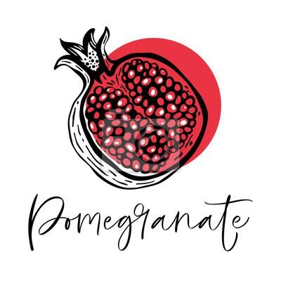 Naklejka Hand drawn pomegranate fruit. Vector illustration.