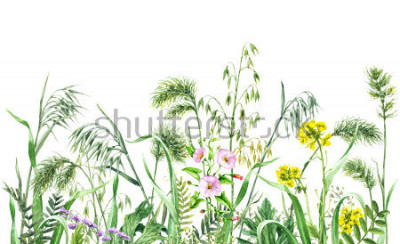 Naklejka Hand drawn wildflowers. Watercolor flowers, wild oats and green grass on white background. Colored floral border.