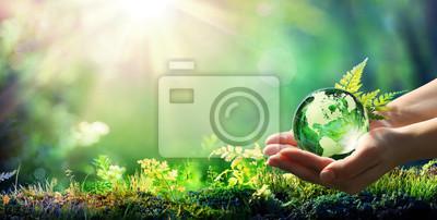 Naklejka Hands Holding Globe Glass In Green Forest - Environment Concept