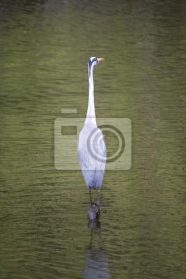 Naklejka Heron siedzący na dziennik w wodzie