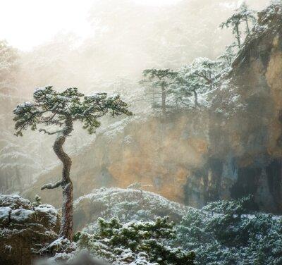 Historia jednego drzewa