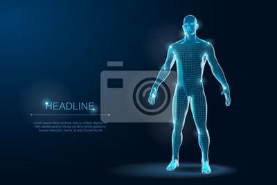 Naklejka Human Body 3D Polygonal Wireframe Blueprint. Vector Illustration