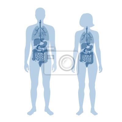 Naklejka human internal organs