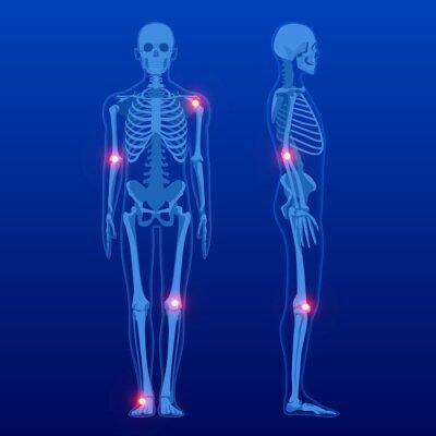 Naklejka Human skeleton in front and profile. Human Skeleton Anatomy X-ray.
