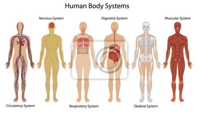 Naklejka Human Systems ciała