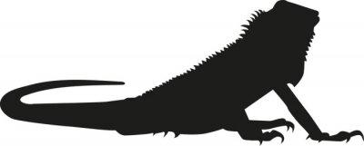Naklejka Iguana sylwetka