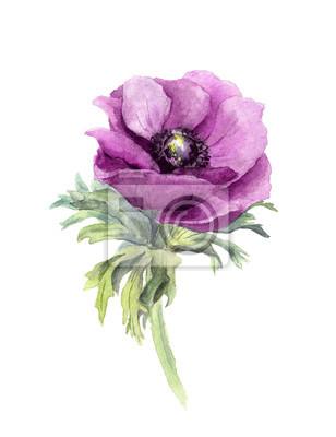 Ilustracja akwarela botaniczny