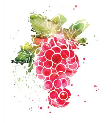 Naklejka Ilustracja akwarela - winogrona