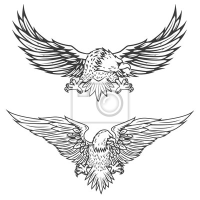 Ilustracja do orła w locie